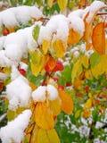 Start av vintern Royaltyfri Foto
