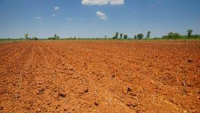 Start cultivation Cassava or manioc plant field at Thailand Stock Image