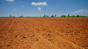 Start cultivation Cassava or manioc plant field at Thailand Royalty Free Stock Image