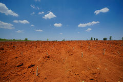 Start cultivation Cassava or manioc plant field at Thailand Royalty Free Stock Photo
