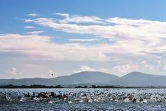 Start flying water birds Stock Photo