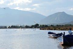 Start flying water birds Royalty Free Stock Photo