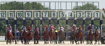 Start gates for horse races. Royalty Free Stock Photos