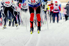 Start group of skiers. Athletes sport of cross-country skiing Royalty Free Stock Photography