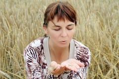 Start of harvesting. Start harvesting on the field Stock Image
