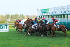 Start in horse racing in Prague. The start of Cleopatra prix  in the 88th Gomba handicap held on Prague om 7.4.2014 Royalty Free Stock Images