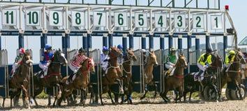 Start horse racing in Pyatigorsk. Stock Photography