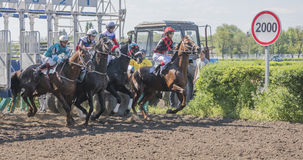 Start of horse racing at the racetrack Stock Image