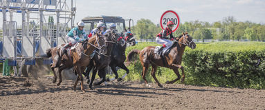 Start of horse racing at the racetrack Stock Photography