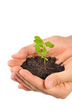 Start new life, hands holding sapling. Hands holding sapling in soil stock image