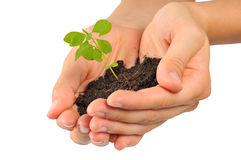 Start new life, hands holding sapling. Hands holding sapling in soil royalty free stock image