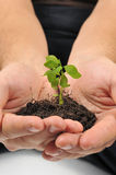 Start new life, hands holding sapling. Hands holding sapling in soil Stock Photo