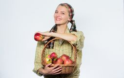 Start?pplet bantar Kvinnan b?r korgen med naturliga frukter Stil för trädgårdsmästare för flicka för skörd för bondeträdgårdsmäst royaltyfri fotografi