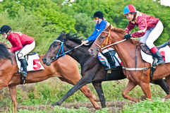 Start of racing horses starting a race Royalty Free Stock Photography