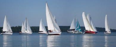 Start of a sailing regatta. Stock Images