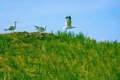 Start the seagulls Royalty Free Stock Photo