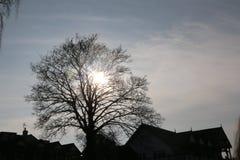 The sun shines through the branches stock photo