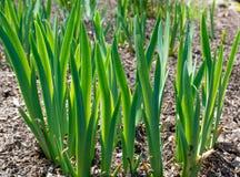 Start of Spring Stock Image