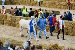 Start of the truffle fair in Alba (Cuneo), has been held for more than 50 years, the donkey race. Alba (Cuneo), Italy - october 5, 2014: With the start of the Stock Photos