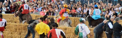 Start of the truffle fair in Alba (Cuneo), has been held for more than 50 years, the donkey race. Alba (Cuneo), Italy - october 5, 2014: With the start of the Stock Images