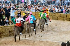 Start of the truffle fair in Alba (Cuneo), has been held for more than 50 years, the donkey race Royalty Free Stock Photos
