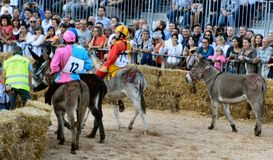 Start of the truffle fair in Alba (Cuneo), has been held for more than 50 years, the donkey race Royalty Free Stock Images