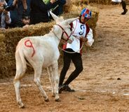 Start of the truffle fair in Alba (Cuneo), has been held for more than 50 years, the donkey race Royalty Free Stock Photography