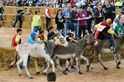 Start of the truffle fair in Alba (Cuneo), has been held for more than 50 years, the donkey race Royalty Free Stock Image