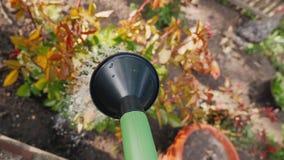 Start watering flowers in the garden. POV video stock footage