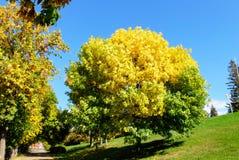 starten av hösten Royaltyfria Foton