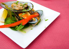 Starter with mussels Stock Image