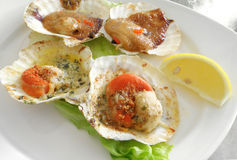 Starters, baked scallops seafood Stock Photos