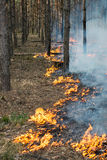 Starting of forest fire Stock Photography