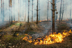 Starting of forest fire Stock Photo