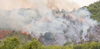 Starting forrest fire with lots of smoke Royalty Free Stock Photo