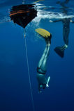 Starting the free dive. Freediver started his dive from the surface into the depth of Blue Hole. Egypt stock image