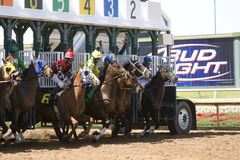 Starting Gate at Lone Star Park. Horses breaking out of the starting gate at the horse races at Lone Star Park, in Grand Prairie, Texas Royalty Free Stock Photography