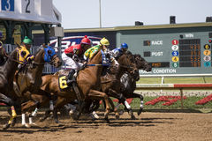 Starting Gate at Lone Star Park Royalty Free Stock Images