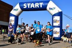 Starting line of the Furgo Dog Race at Fargo Marathon