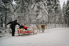 Starting of the race on the reindeer sledges Royalty Free Stock Photography