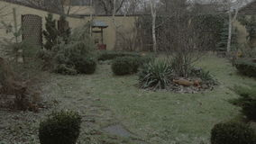 Starting to snow - snow falling in the back yard - 4K. Starting to snow - snow falling in the back yard 4K stock video footage