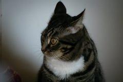 Startled cat stock image