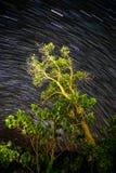 Startrail στο τροπικό δάσος Στοκ Εικόνες