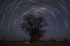 Startrail at Baines campsite. In Botswana royalty free stock image