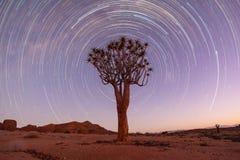 Startrail del árbol del estremecimiento Foto de archivo