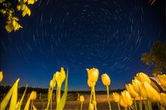 Startrail sobre tulipas Imagem de Stock