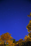 Startrails med träd Royaltyfri Foto