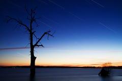 Startrails runt om gammalt träd i sjön royaltyfri fotografi