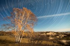 Startrails: tree on the grassland Stock Photos