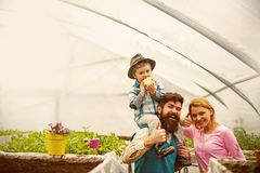 Startup production. business startup production. startup production concept. startup production of happy family in. Greenhouse stock photo